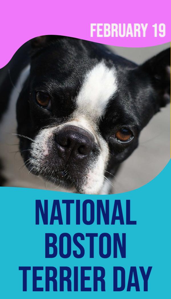 National Boston Terrier Day
