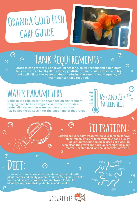 Oranda Goldfish Care Guide Infographic