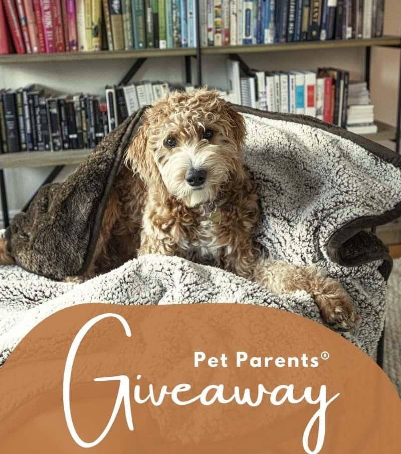 #ad Pet Parents blanket giveaway