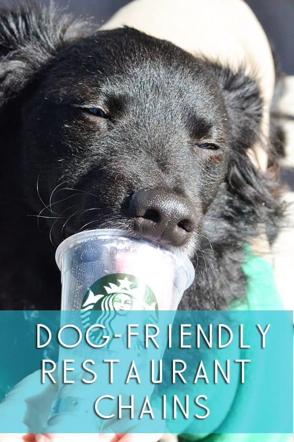 dog friendly restaurant chains