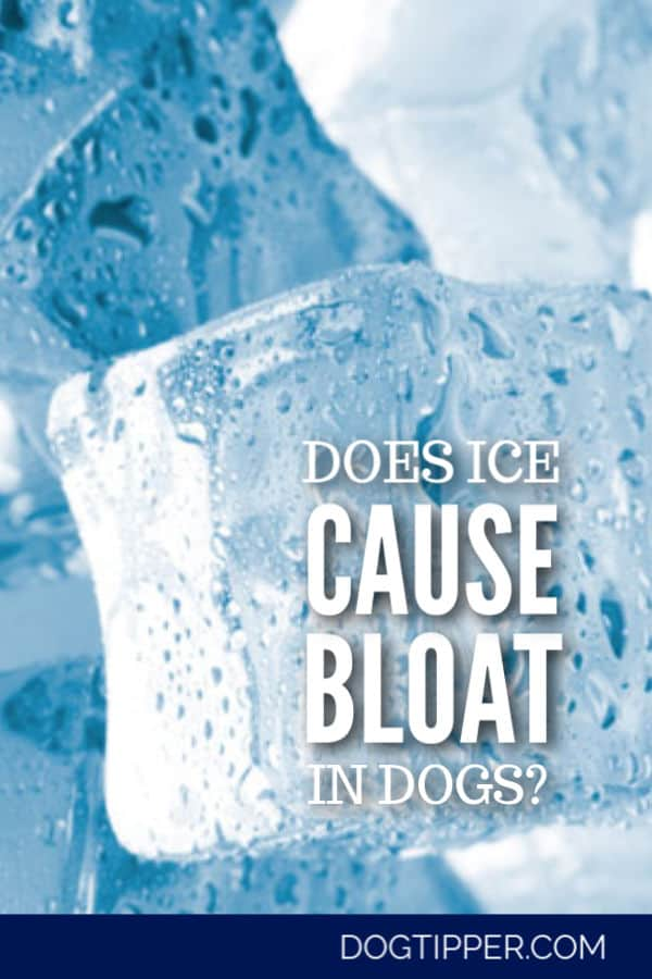 does ice cause bloat in dogs