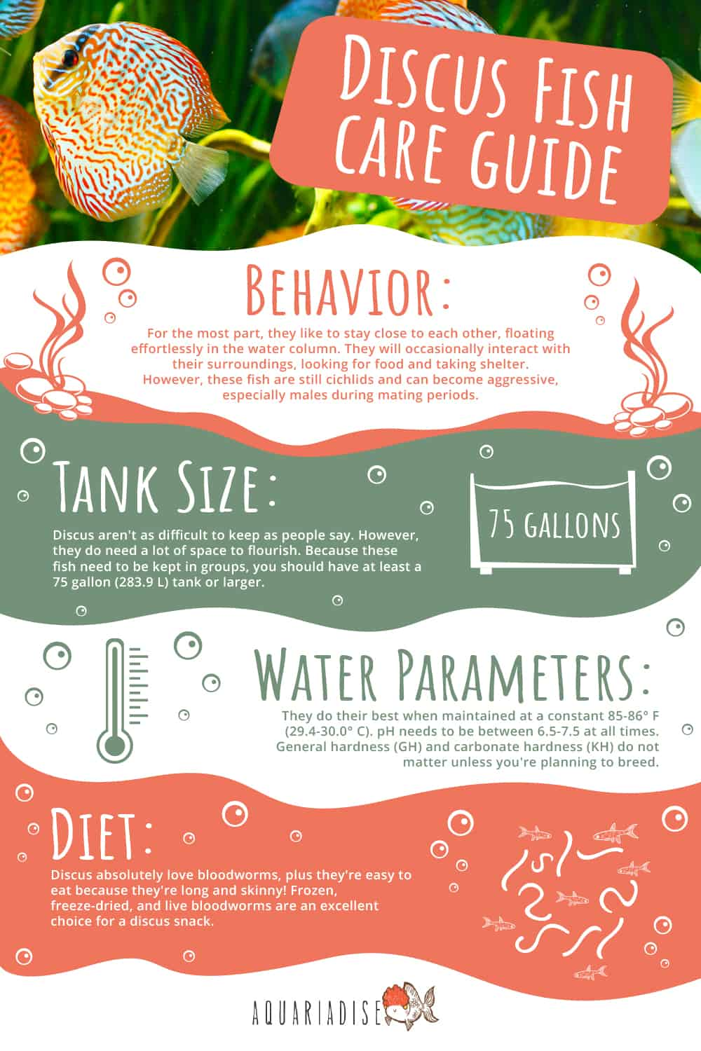 Discus Fish Care Guide Infographic