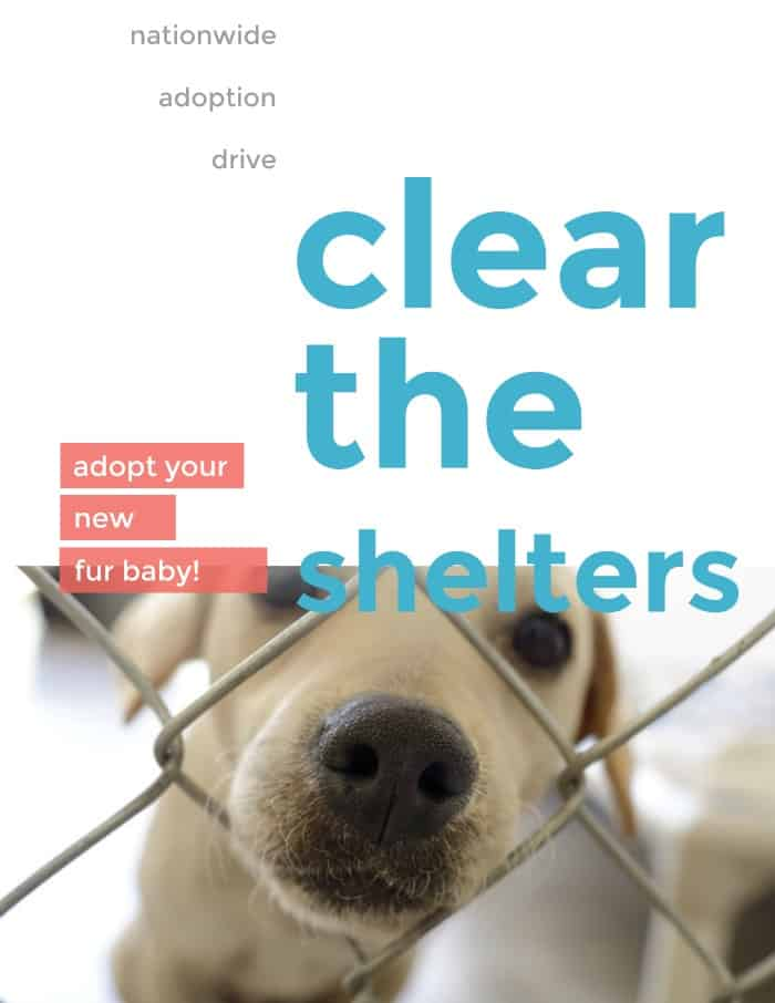 clear the shelters adoption drive