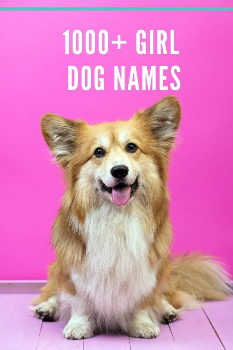 girl dog names - old fashioned names for your girl dog