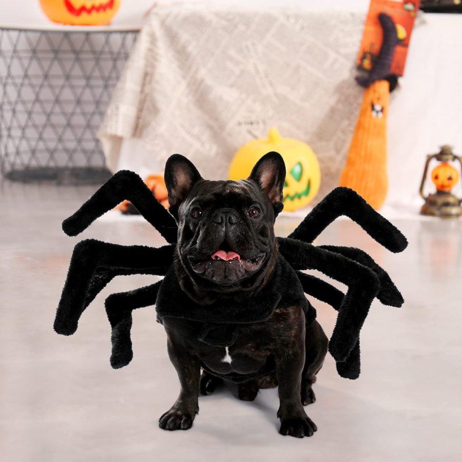 dog in spider costum