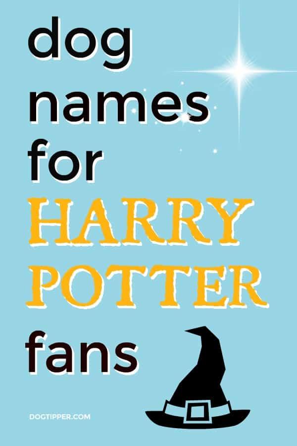 harry potter dog names