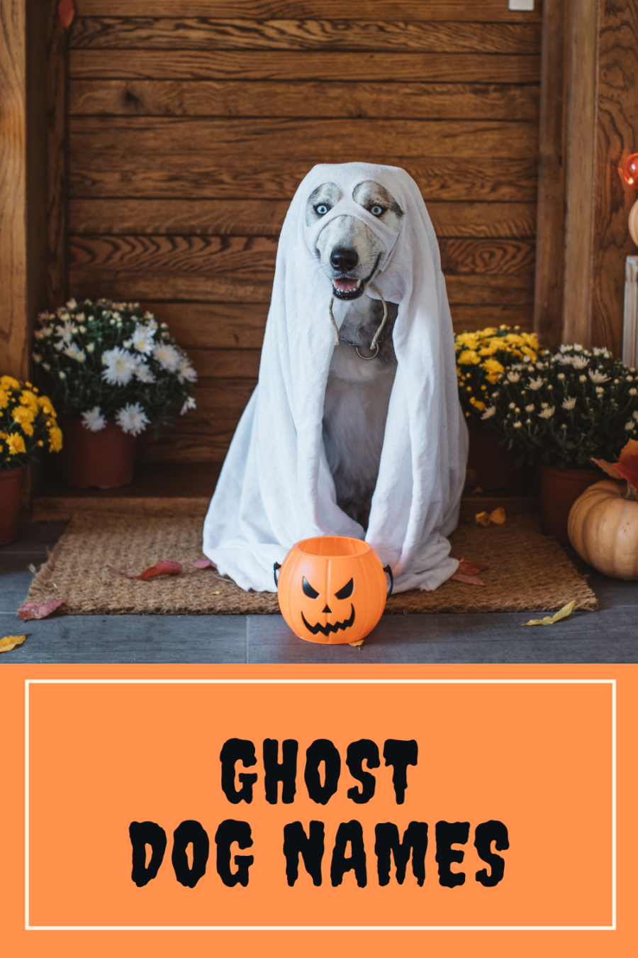 Ghost dog names