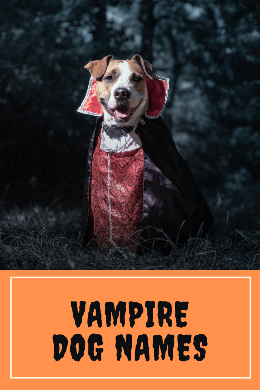 VAMPIRE DOG NAMES