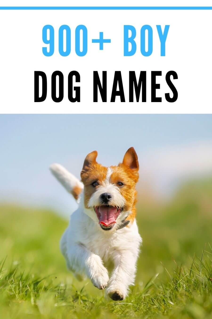 over 900 boy dog names for male dogs