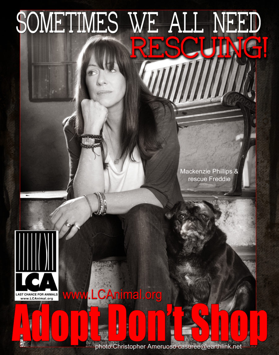 """Mackenzie Phillips with- Freddie, the actress's rescue Pug in a Last Chance for Animals """"Adopt, Don't Shop"""" ad."""