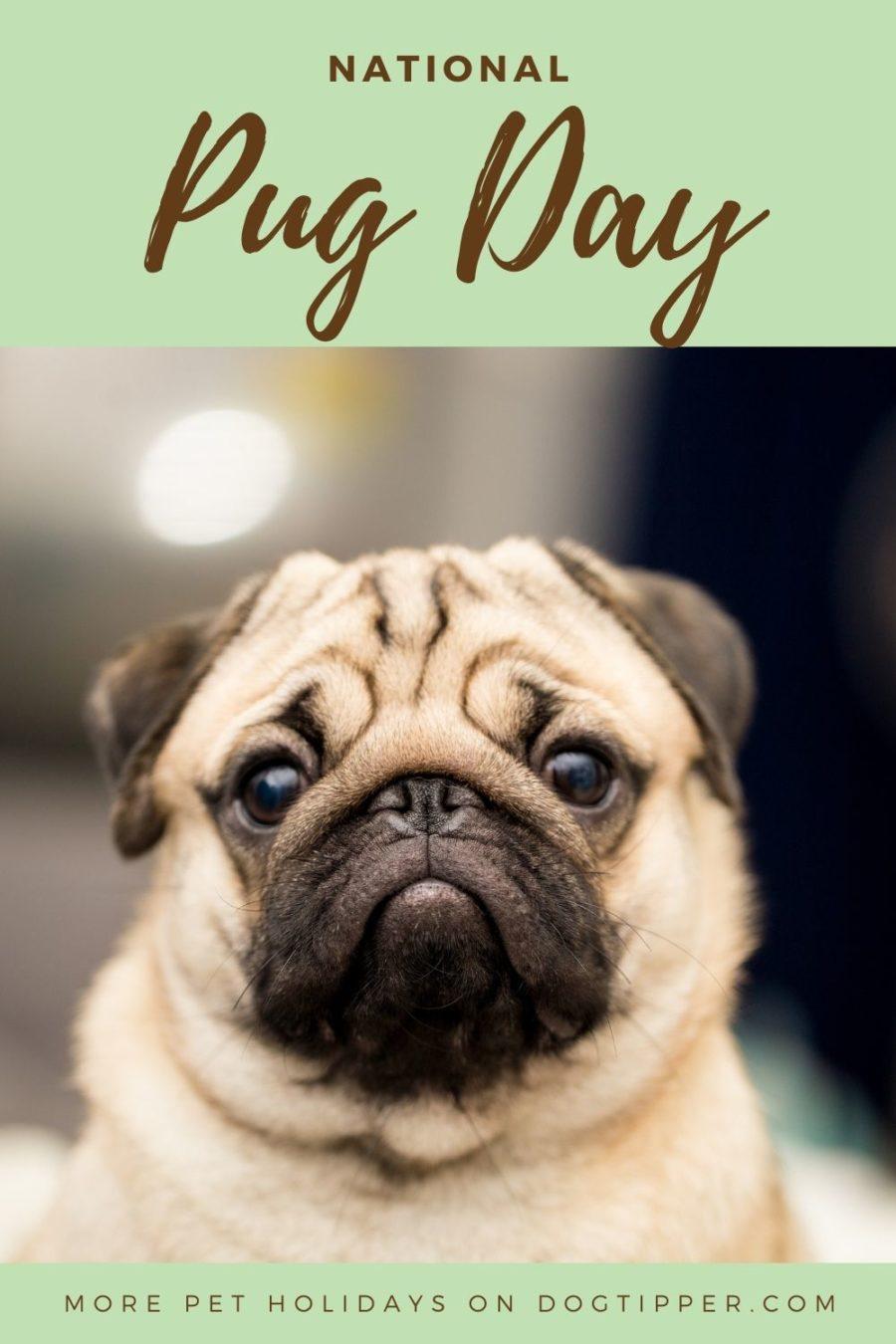 National Pug Day